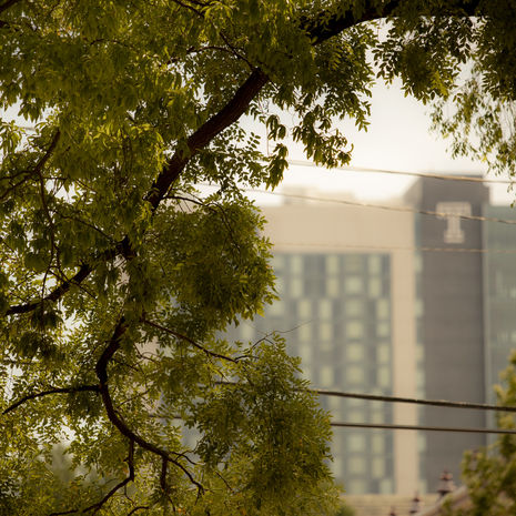 a shot of buildings through the trees on Main Campus.