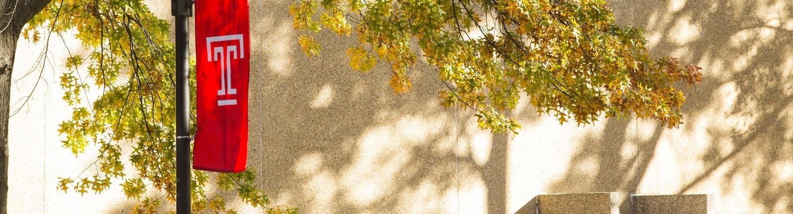 Autumn tree shadow on sunny wall