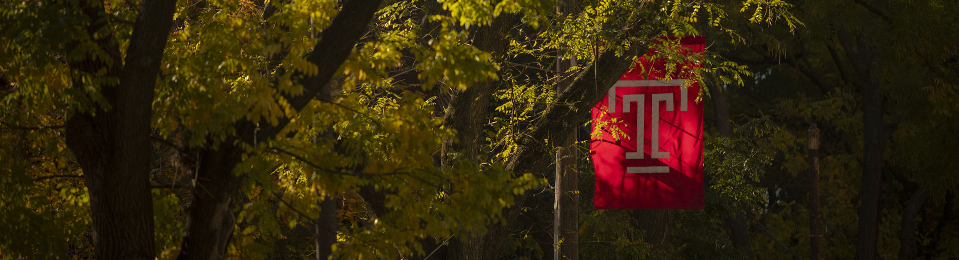 Temple flag nested in trees