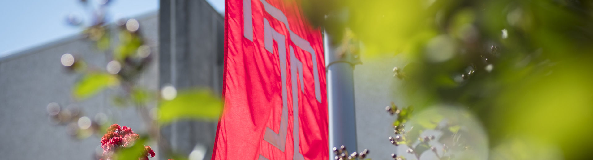 The Temple T flag on a sunny day