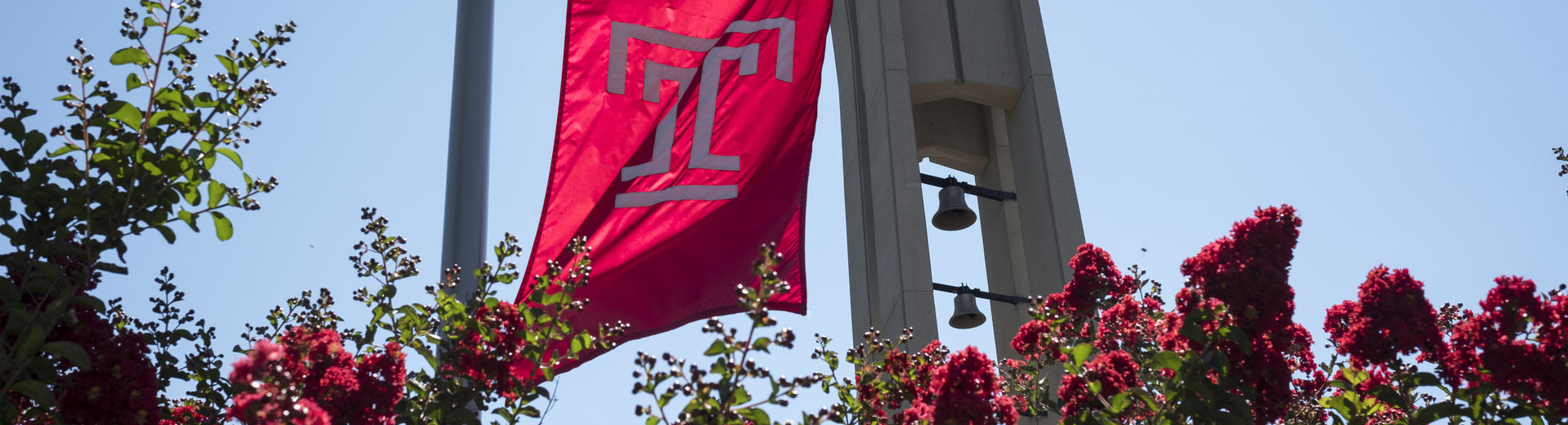 Temple University flag with bell tower in the distance and pink flowers in foreground