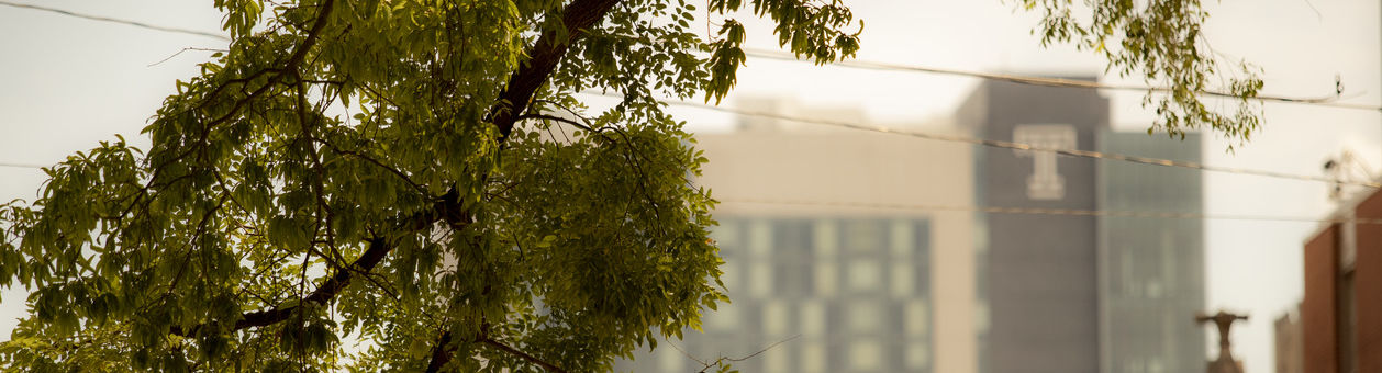 A tree branch hangs in front of Morgan Hall on Temple's Main Campus.