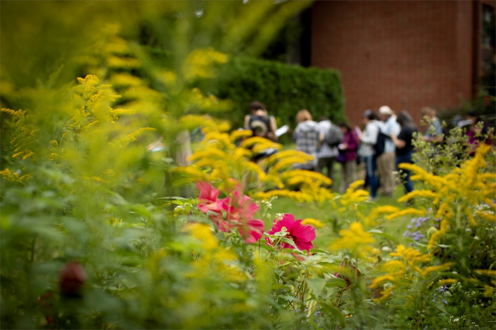 Yellow and pink flowers on Ambler Campus with student group